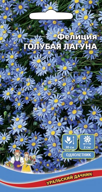 Фелиция цветы выращивание 79
